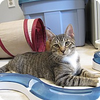 Adopt A Pet :: Joni - Lafayette, NJ