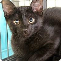 Adopt A Pet :: Tristan - Sarasota, FL