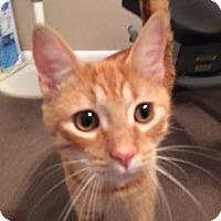 Adopt A Pet :: Jax - Toledo, OH