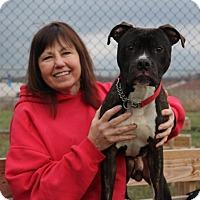 Adopt A Pet :: Brysen - Elyria, OH