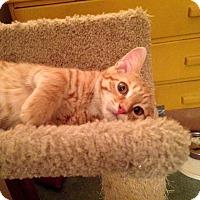 Adopt A Pet :: Hollis - Lombard, IL