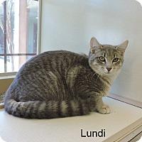 Adopt A Pet :: Lundi - Slidell, LA