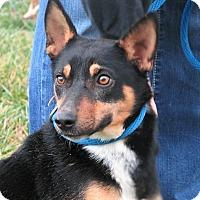 Adopt A Pet :: Flirt - Germantown, MD