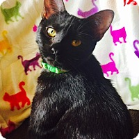 Adopt A Pet :: PATIENCE - Burlington, NC