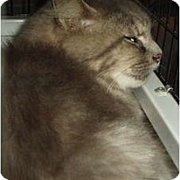 Adopt A Pet :: Missy - Westfield, MA