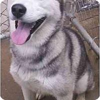 Adopt A Pet :: Twilight--Pending! - Belleville, MI
