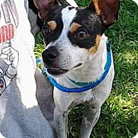 Adopt A Pet :: A-Jax - Jacksonville, FL