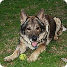 Adopt A Pet :: Franco 4163