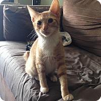 Adopt A Pet :: Aslan - Berkeley Hts, NJ