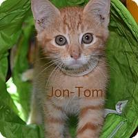 Adopt A Pet :: Jon-Tom - Warren, OH