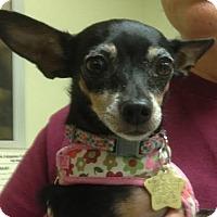 Adopt A Pet :: Tilly - Studio City, CA