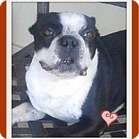 Adopt A Pet :: Chaplin - Miami, FL