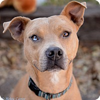 Adopt A Pet :: Baxter - Corrales, NM