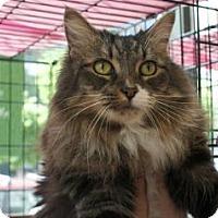 Adopt A Pet :: Katerina - New York, NY