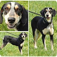 Adopt A Pet :: Dixie - Bardonia, NY
