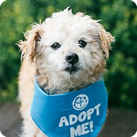 Adopt A Pet :: Smitty - Pacific Grove, CA
