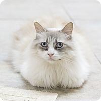 Adopt A Pet :: Twila - Houston, TX