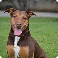 Adopt A Pet :: Lola - San Diego, CA