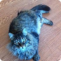Adopt A Pet :: Rocky - Novato, CA