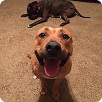 Adopt A Pet :: Pocahontas - Gilbert, AZ