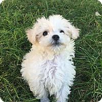 Adopt A Pet :: *Rascal* - Weatherford, TX