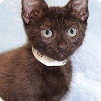 Adopt A Pet :: Zoo - Encinitas, CA
