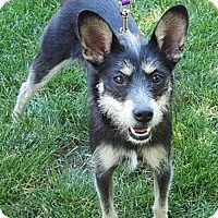 Adopt A Pet :: Gidget - Fort Wayne, IN
