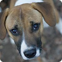 Adopt A Pet :: Butchie - Reidsville, NC