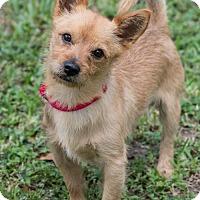Adopt A Pet :: Archie - Miami, FL