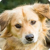 Adopt A Pet :: Canelo - San Diego, CA