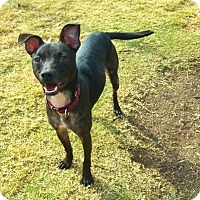 Adopt A Pet :: Fitz - wolfeboro, NH