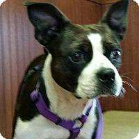 Adopt A Pet :: Purdy - Forreston, TX