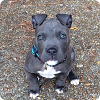 Adopt A Pet :: Opie - Hagerstown, MD