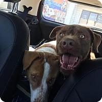 Adopt A Pet :: Davis - Beverly Hills, CA