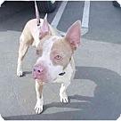 Adopt A Pet :: Nick
