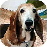 Adopt A Pet :: Mercedes - Phoenix, AZ