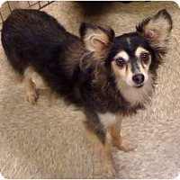 Adopt A Pet :: Lady - Fowler, CA