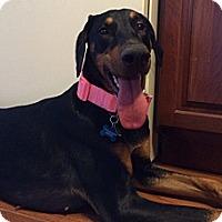 Adopt A Pet :: Zoey - New Richmond, OH