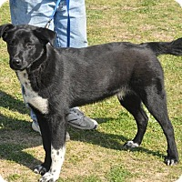 Adopt A Pet :: Buggs - Byhalia, MS