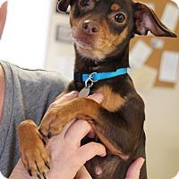 Adopt A Pet :: Jozie - Homewood, AL