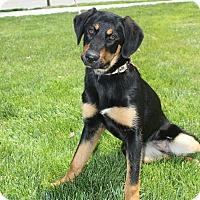 Adopt A Pet :: Millie - Plainfield, IL