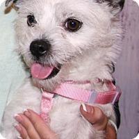Adopt A Pet :: Scarlet - Las Vegas, NV