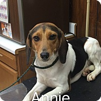 Adopt A Pet :: Annie (HAS BEEN ADOPTED) - Buffalo, NY