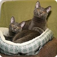 Adopt A Pet :: Gary and Glen - Milford, MA