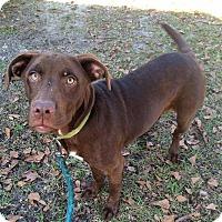 Adopt A Pet :: Tootsie - Daleville, AL