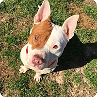 Adopt A Pet :: Zack - Fort Valley, GA