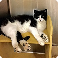 Adopt A Pet :: Nell - Colmar, PA