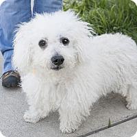 Adopt A Pet :: Mel - Oakland, NJ