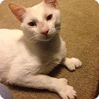 Adopt A Pet :: Lad - Gainesville, FL