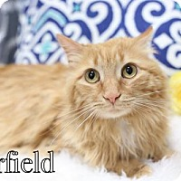 Adopt A Pet :: Garfield $45 Male - knoxville, TN